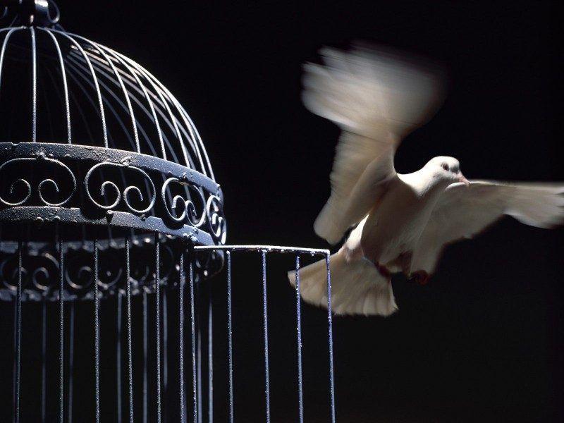 ¡¡Serás verdaderamente un Ser libre!!