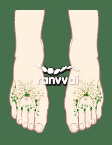 Linfático Ranvvai fibromialgia