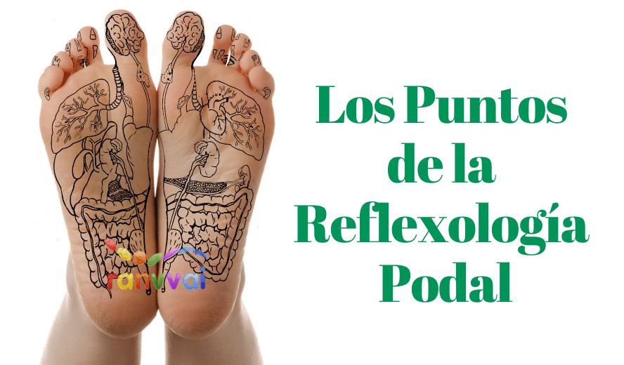 Los Puntos De La Reflexología