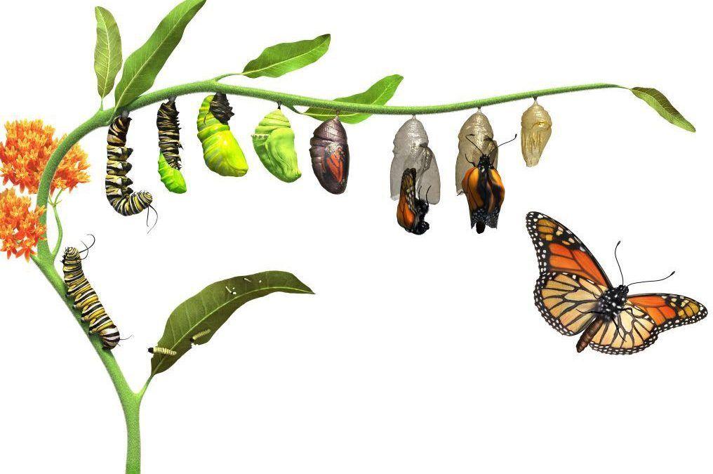 ¿Quieres conocer una Terapia Transformadora? ¡Descubre la Técnica Metamórfica!